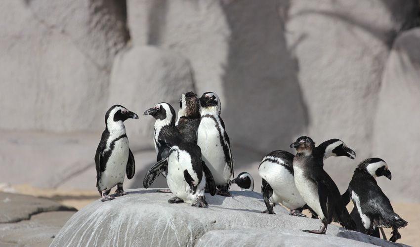 Penguin´s Beach